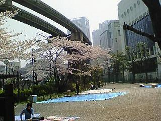 芝浦公園の桜