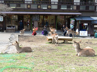 奈良の春日野、青芝に腰をおろせば鹿のフン