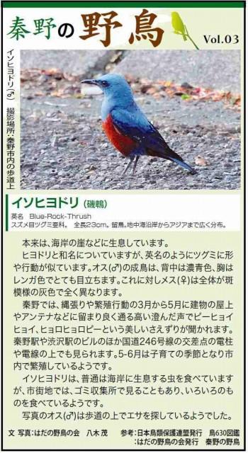 秦野の野鳥