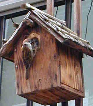 小学校に巣箱と餌場を設置