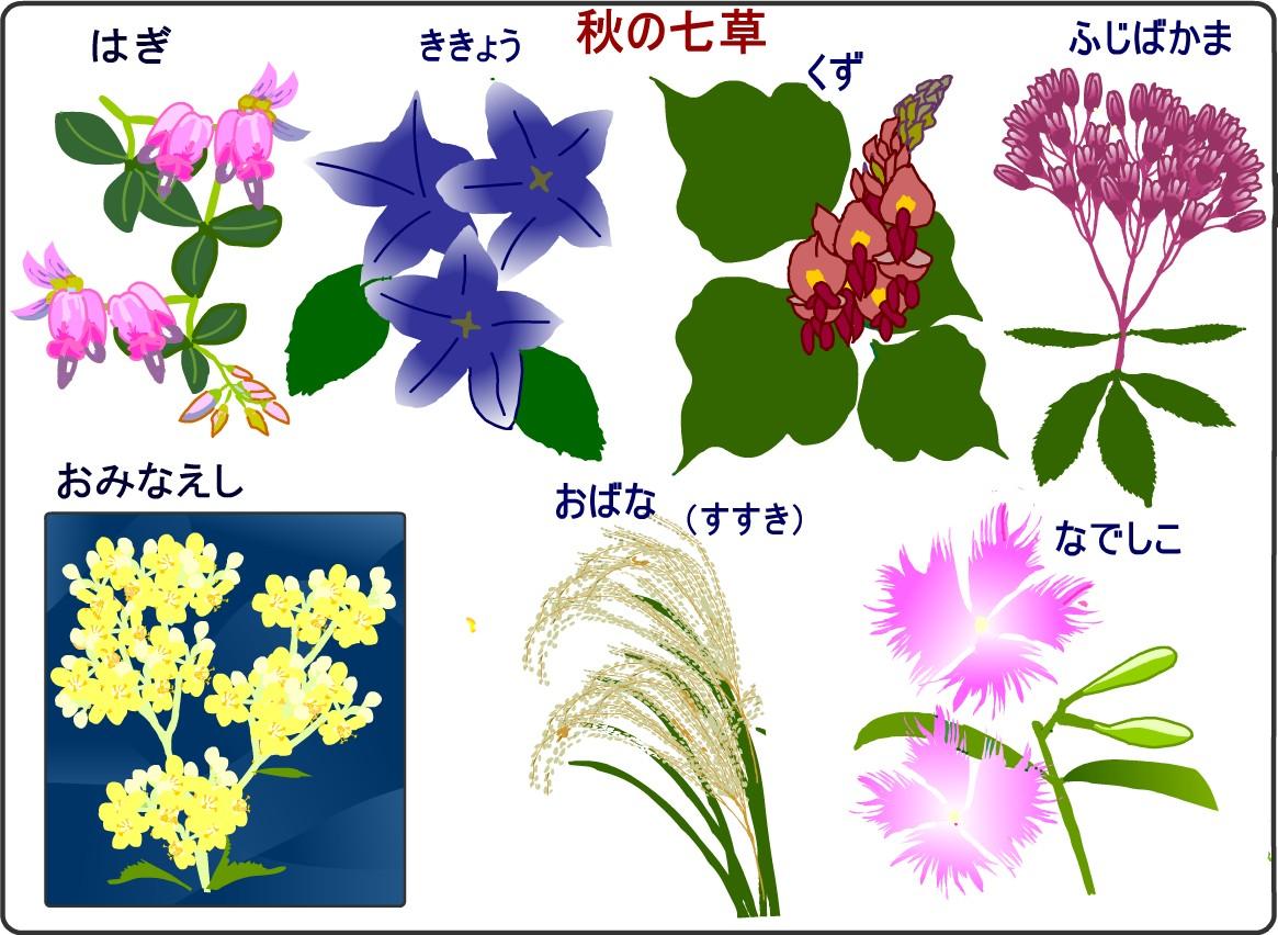 秋の七草 画像
